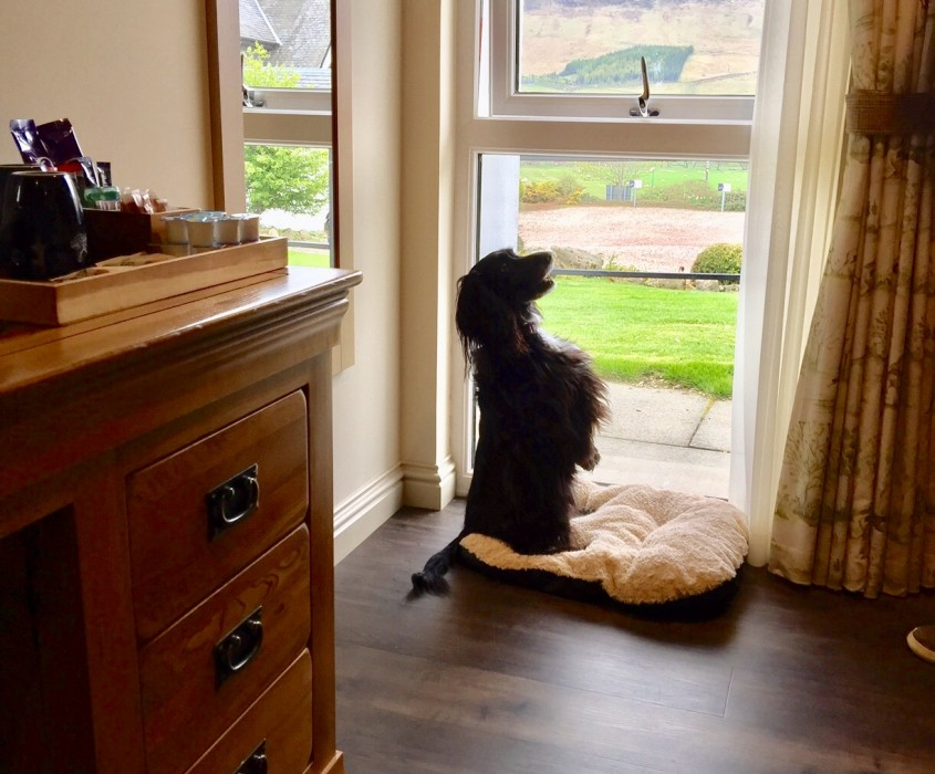 Steading bedrooms - all our steading rooms are dog friendly