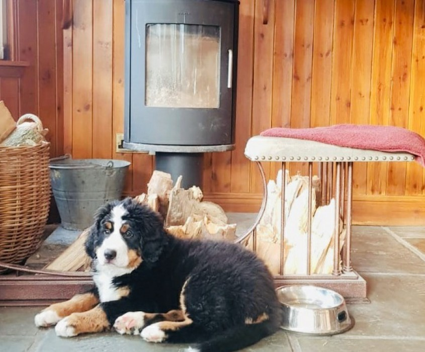 Hotel - Brandy Bothy - Dog friendly