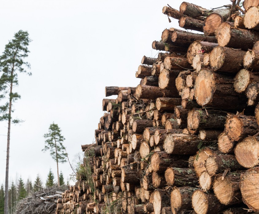 Canva Pulpwood Pile in a Forest